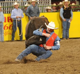 Joe Frost takes down a steer at the College National Finals Rodeo
